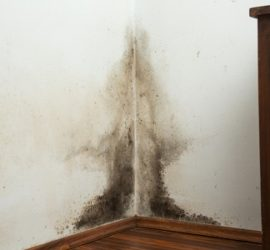 mold removal and remediation in Wisconsin - what to ask a mold contractor company before you hire them