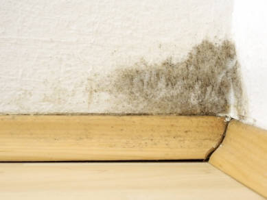Mold Removal and Remediation in Wisconsin - Mold infested corner of the house