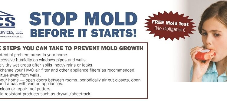 Mold Prevention Tips-Stop Mold Before It Starts