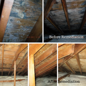 Before and After Photos of Mold Removal and Remediation from CCS Property Services, Northeast Wisconsin