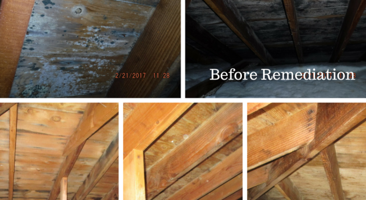 Before and After Photos of Mold Removal and Remediation from CCS Property Services, Northeast Wisconsin, Appleton, Green Bay, Sheboygan, Door County, Algoma, Kewaunee, Manitowoc