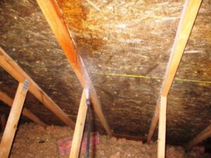 microbial application from CCS Property Services for Mold Abatement Process
