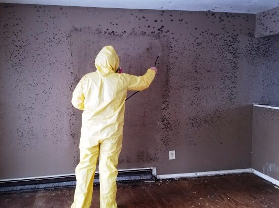 Green Bay mold removal and remediation company CCS Property Services LLC