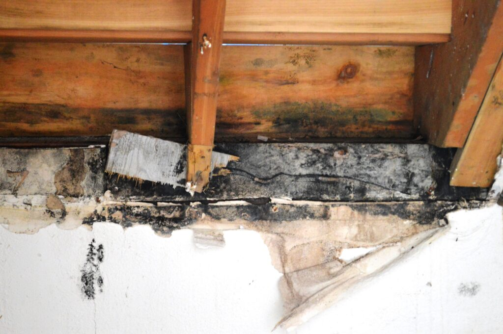 green bay black mold removal and remediation services by CCS Property Services