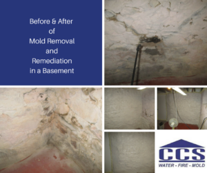 Mold Removal and Remediation Photos from CCS Property Services