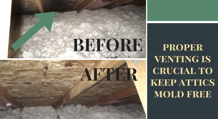 mole-removal-in-the-attic-wisconsin-mold-experts-ccs-property-services