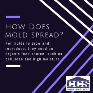 how does mold spread, mold removal