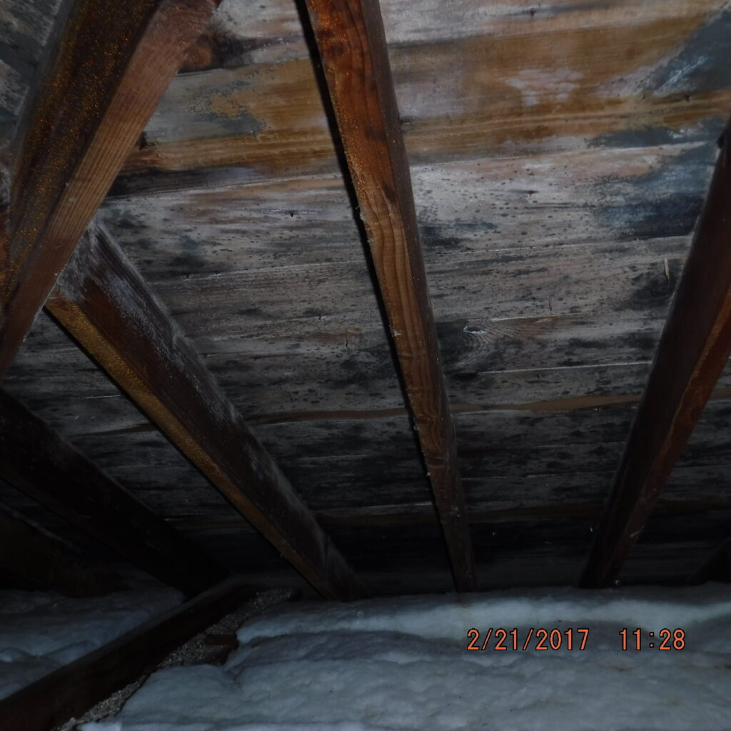 mold-removal-and-remediation-services-from-ccs-property-services-protect-your-home-from-mold-growth