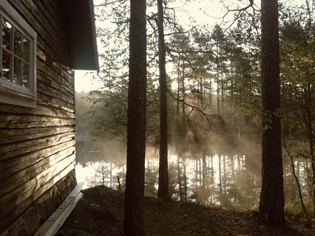 Cabin, Cottage, or Lake Home Mold Removal