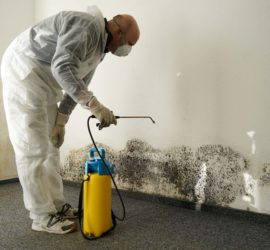 mold remediation specialists CCS Property Services