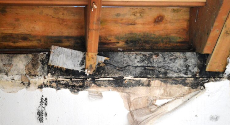 When should you get a Professional Mold Inspection?
