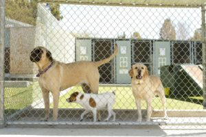 Pet Facility Deodorizing and Sanitizing