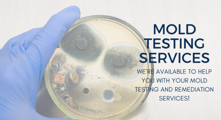mold testing services wisconsin