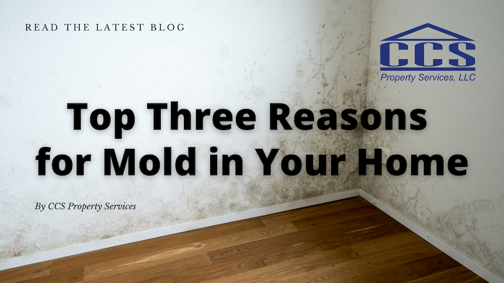 Top Three Reasons for Mold in Your Home