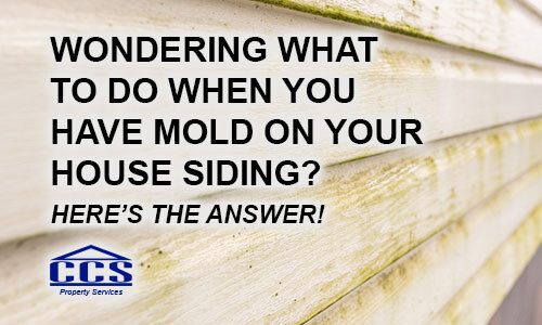How to remove mold on siding